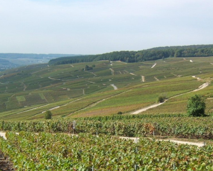Geen Montagne de Reims - maar de bosjes van Wenduine