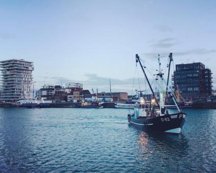 Belgische garnalen op zee en ... in de Schelde