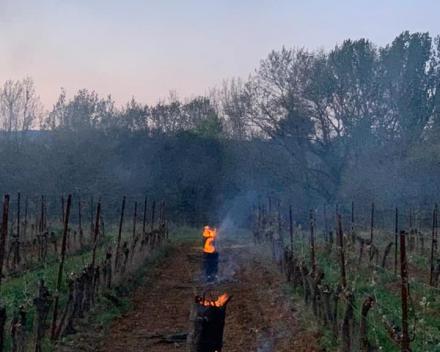 Schade door vrieskou bij wijnboeren en fruittelers